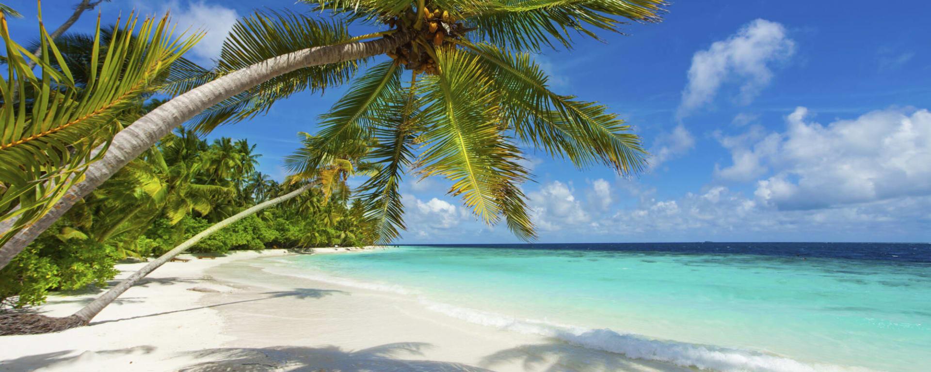 Malediven entdecken mit Tischler Reisen: Malediven Strand Palmen Meer