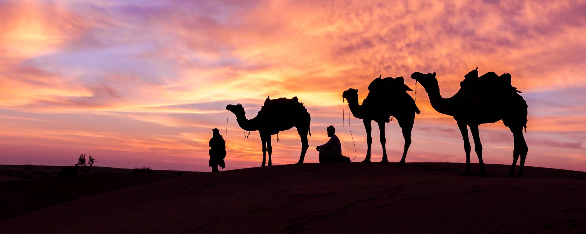 Oman entdecken mit Tischler Reisen: Oman Kamele im Sonnenuntergang