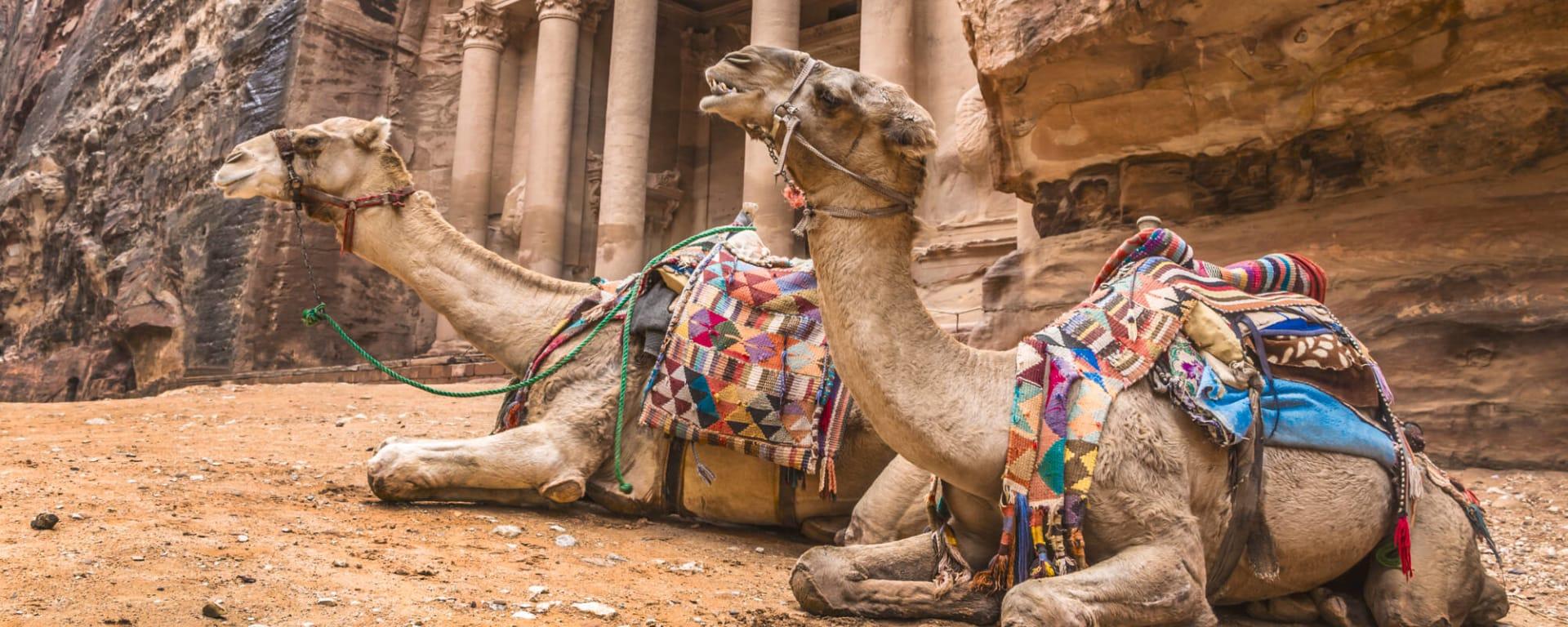 Jordanien entdecken mit Tischler Reisen: Jordanien Petra Kamele