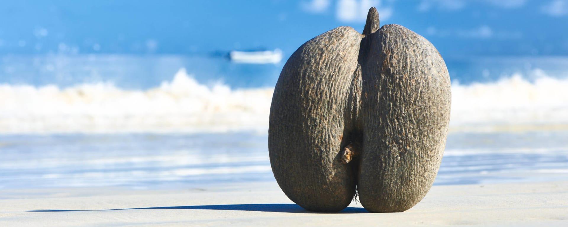 Seychellen entdecken mit Tischler Reisen: Seychellen Praslin Strand Coco de Mer