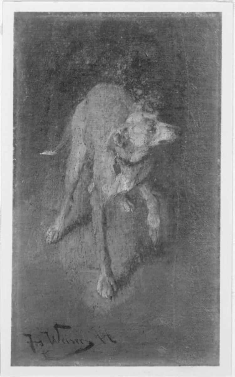 Hund, vorwärts schreitend