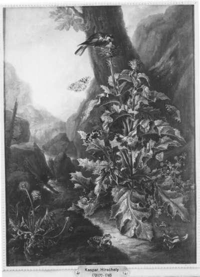 Große Distelpflanze