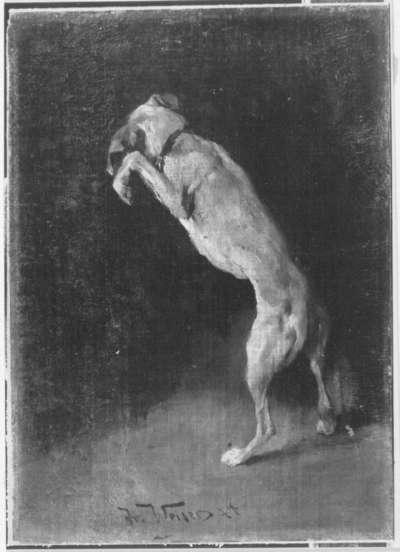 Aufspringender Hund