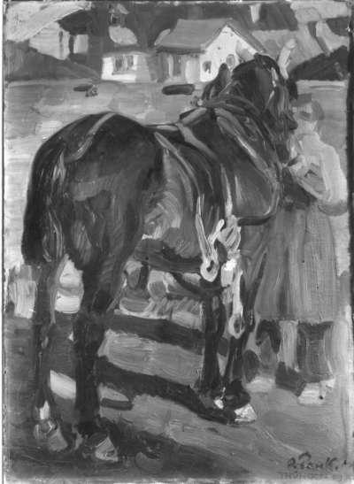 Pferdestudie