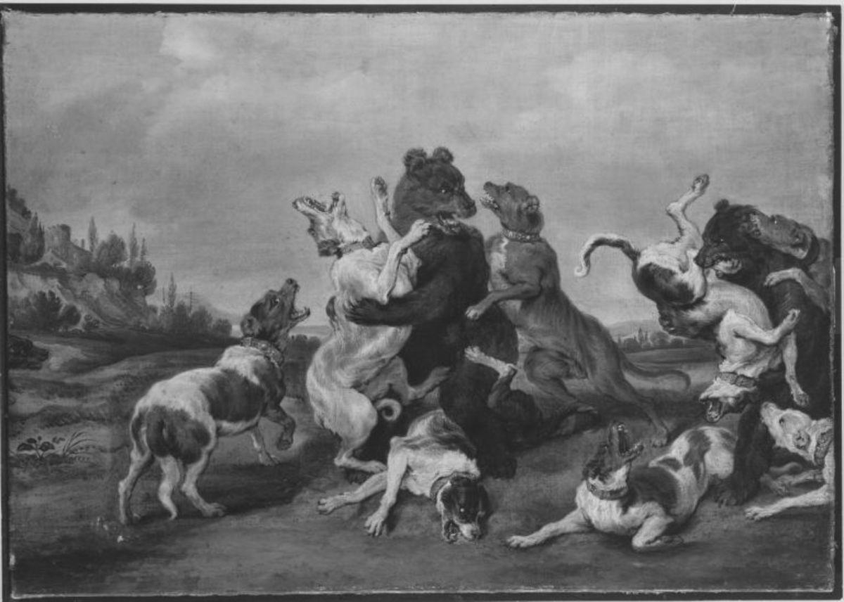 Kampf zwischen Bären und Hunden
