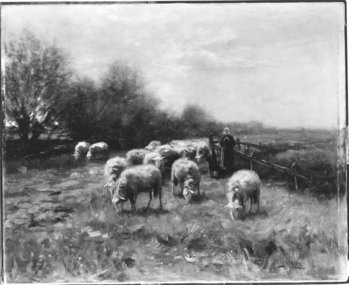 Schafe und Schäferin
