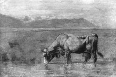 Kuh am Seeufer