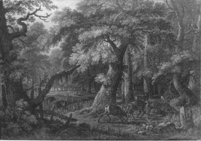 Zwei kämpfende Hirsche im Wald