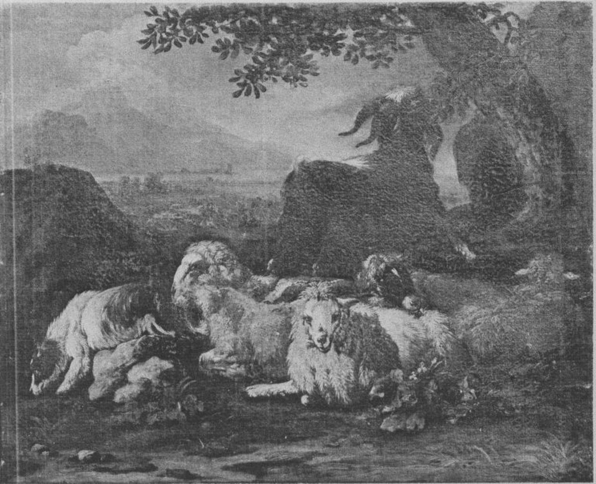 Ruhende Schafherde