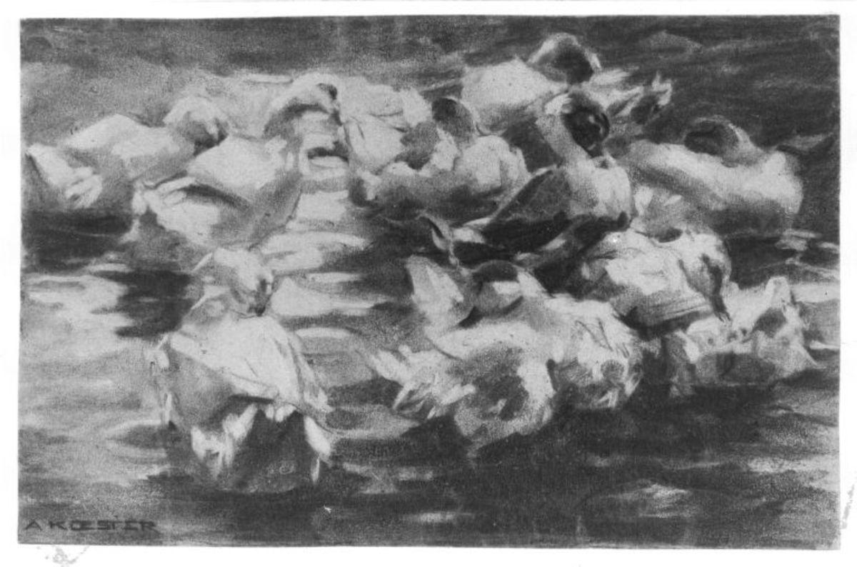 Weiße, sich putzende Enten am Wasser