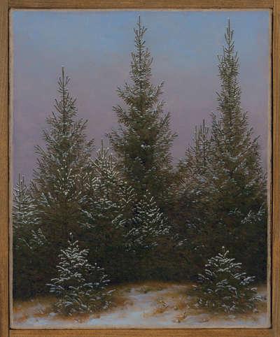 Fichtendickicht im Schnee (Aus der Dresdner Heide I)