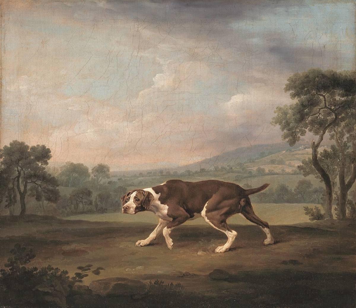 Hühnerhund