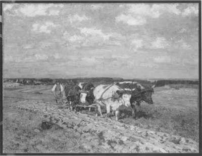 Pflügender Bauer mit einem Gespann von vier Ochsen