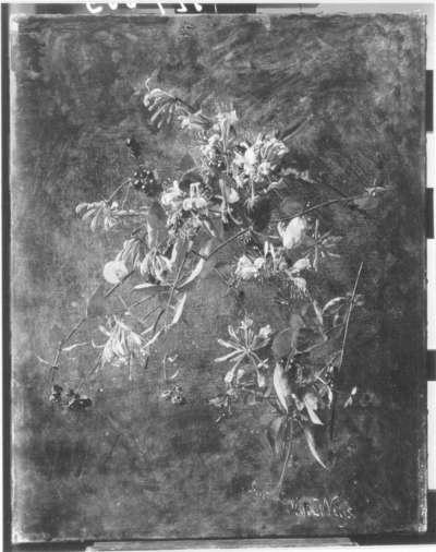Blumenstillleben (Geißblatt)