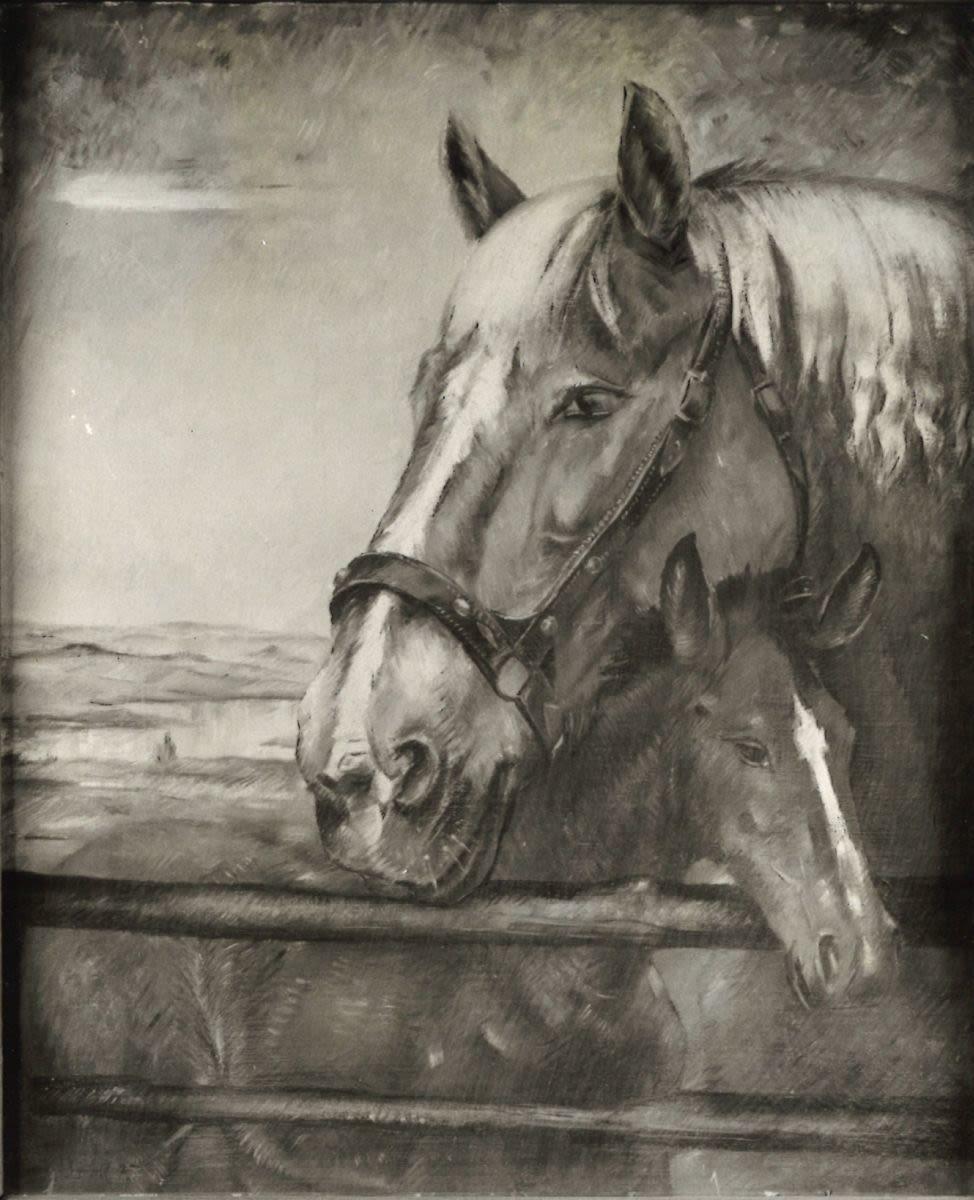 Pferd mit Fohlen am Zaun