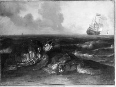 Schildkröten am Meeresufer