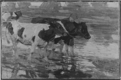 Bauer mit Rindern in der Schwemme