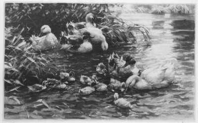 Drei Entenpaare mit neun Entenküken