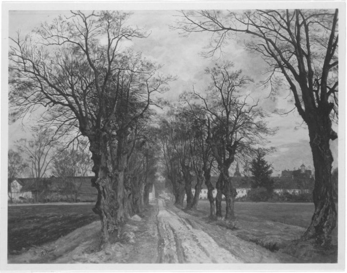 Schleißheimer Linden