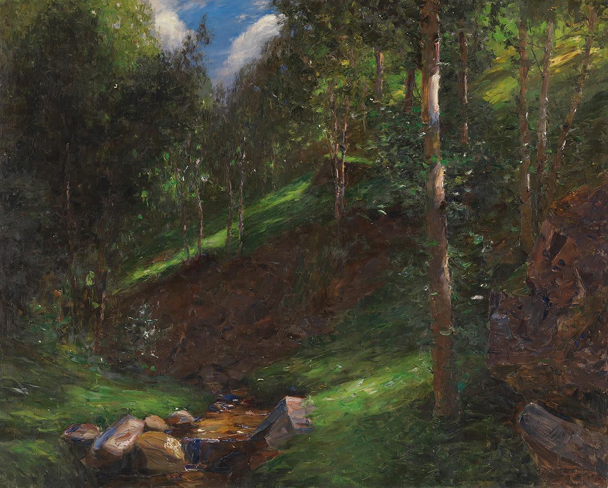 Stille Waldschlucht