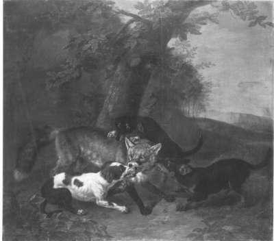 Fuchs wird von Hunden gestellt