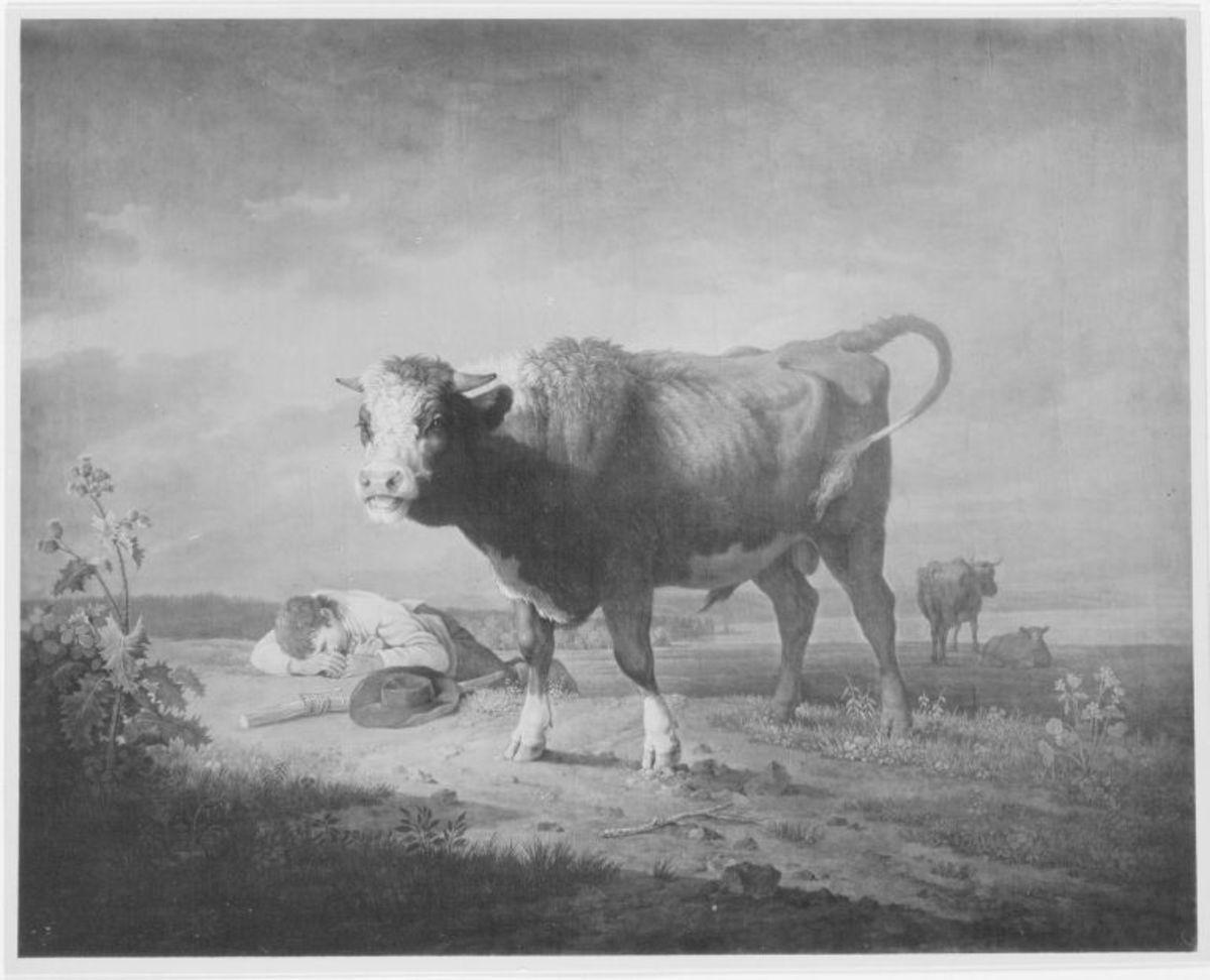 Junger Stier mit schlafendem Hirten