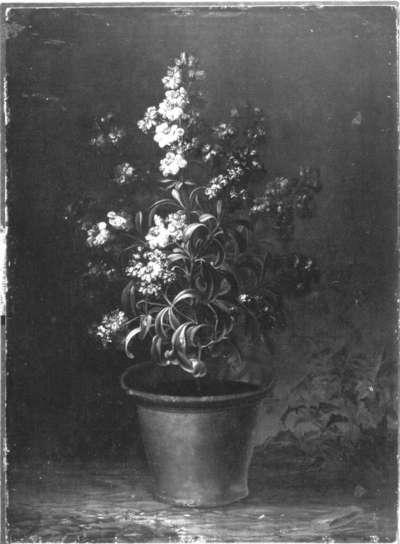 Blumenstück (Rote Levkojen)