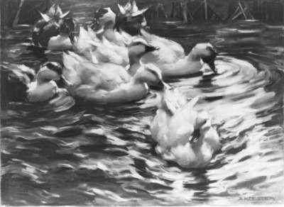 Von links heranschwimmende Enten