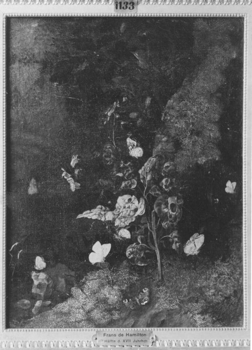 Stillleben: Schmetterlinge und Pflanzen