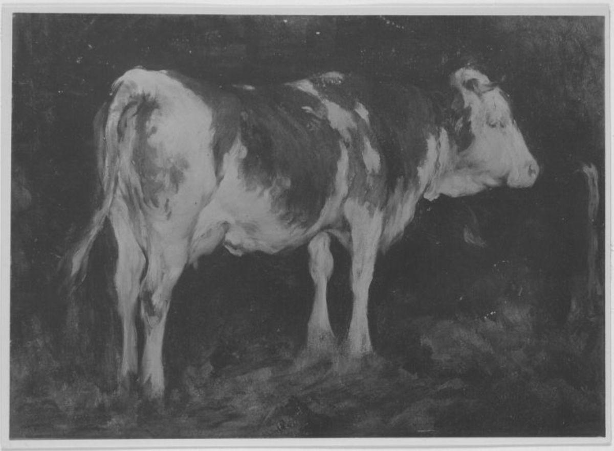 Kuh im Stall (auf der Rückseite: Liegende Kuh)