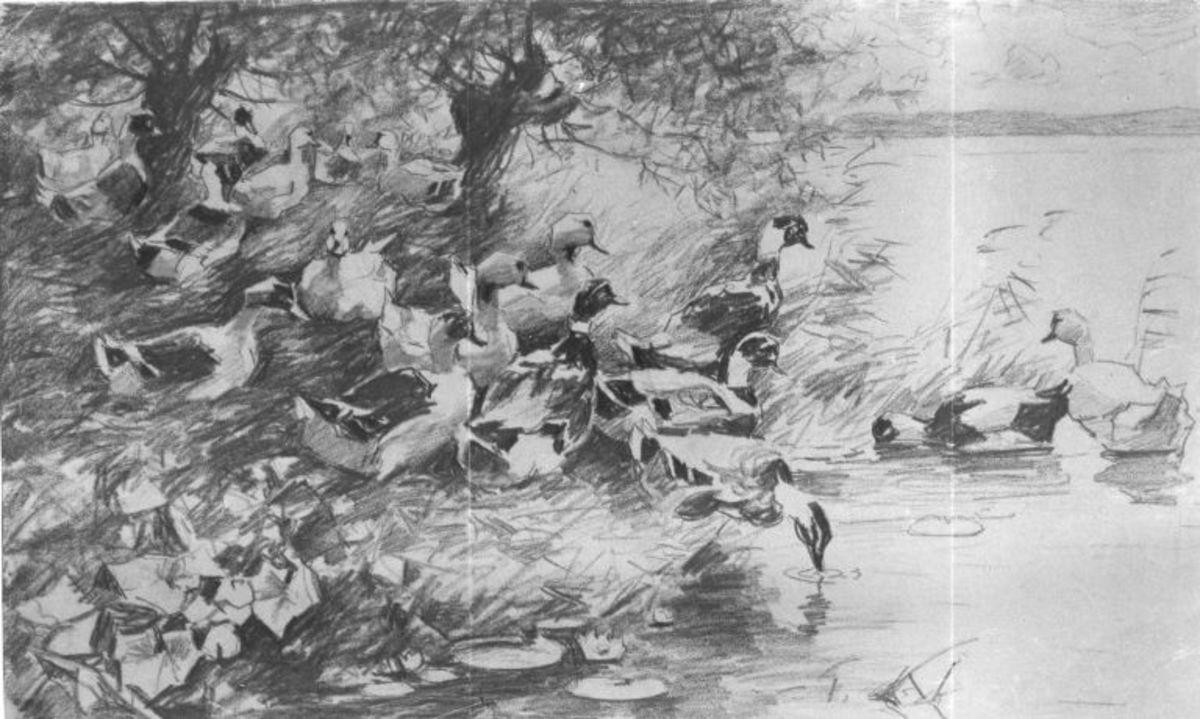 Enten beim Einstieg ins Wasser