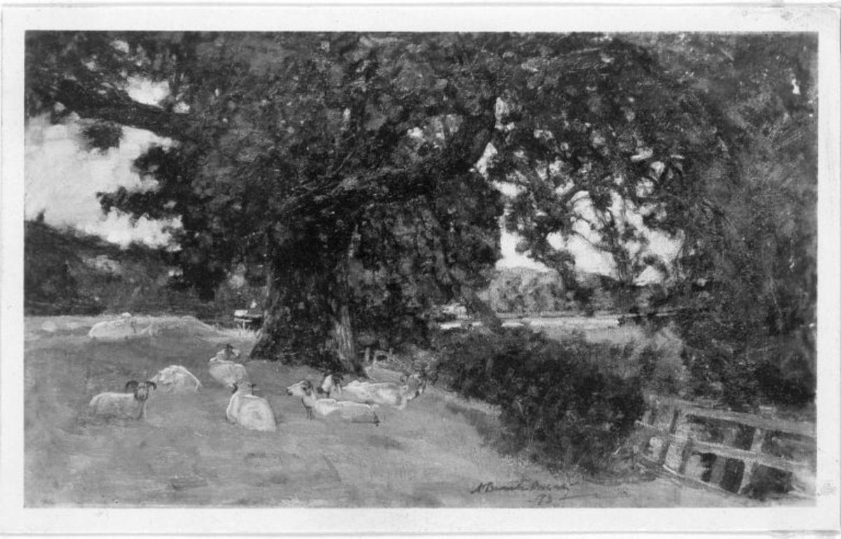 Ruhende Schafe im Schatten eines Baumes