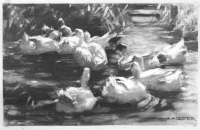 Weiße Enten auf dem Wasser, Schilf im Hintergrund