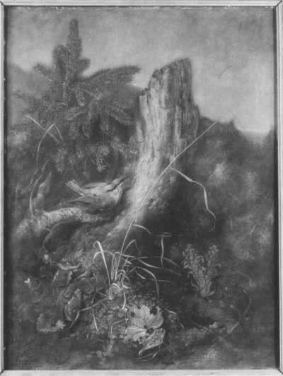 Spechtmeise am Baumstumpf