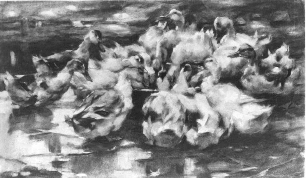 Enten, aus einem runden Napf fressend