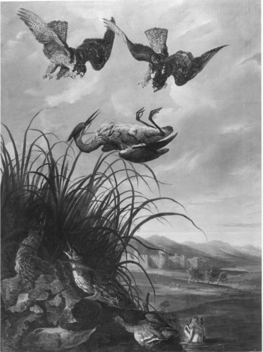 Reiher von Falken verfolgt
