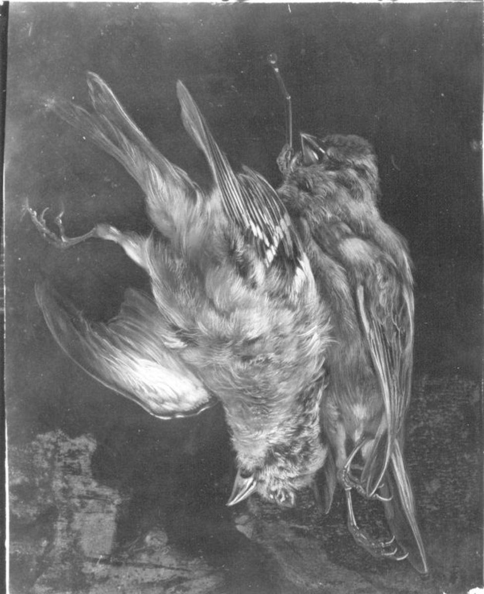 Stillleben mit toten Vögeln