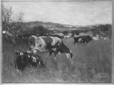 Vieh auf der Weide