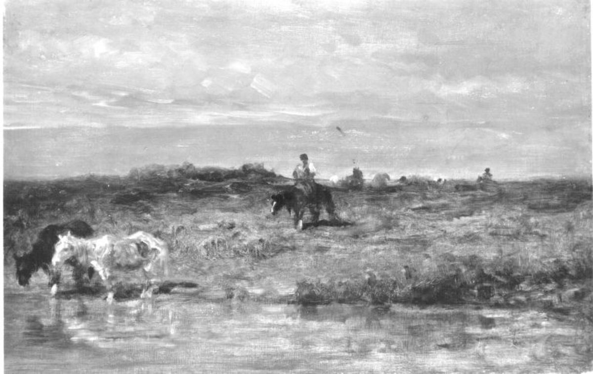 Pferde am Wasser
