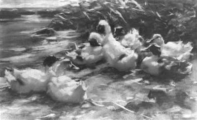 Sich ausruhende Enten