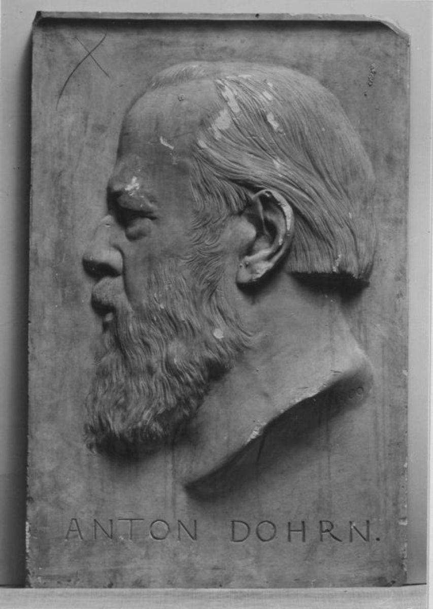 Der Zoologe Anton Dohrn (1840–1909)