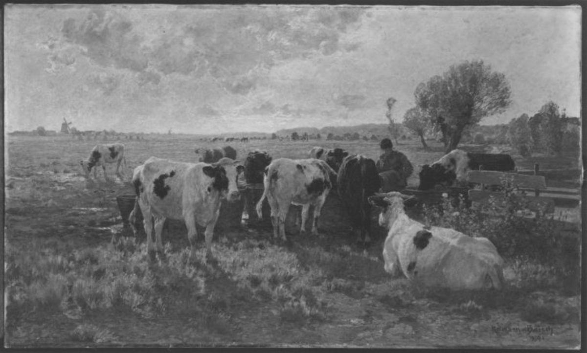 Holländische Viehweide
