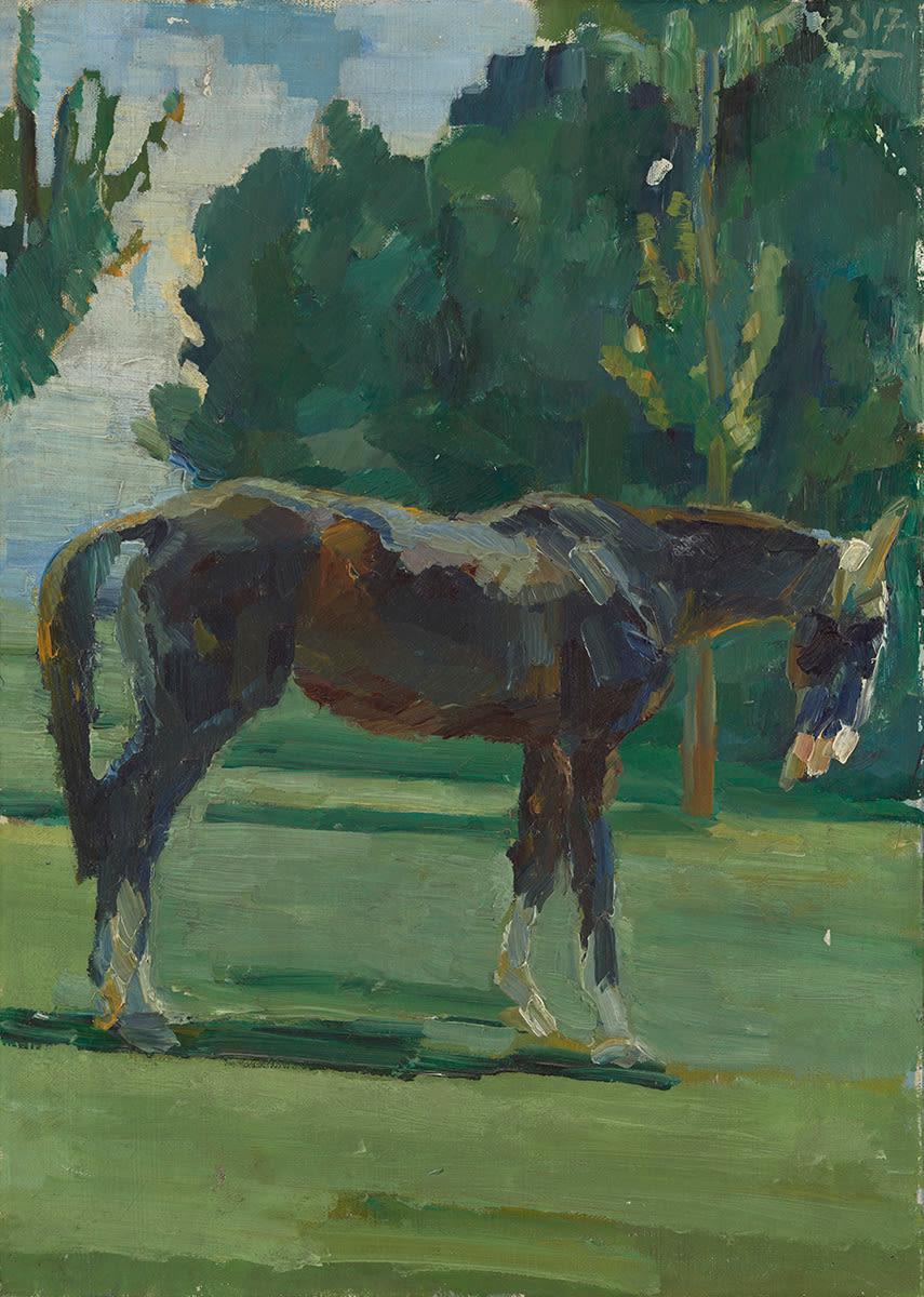Pferd im Grünen