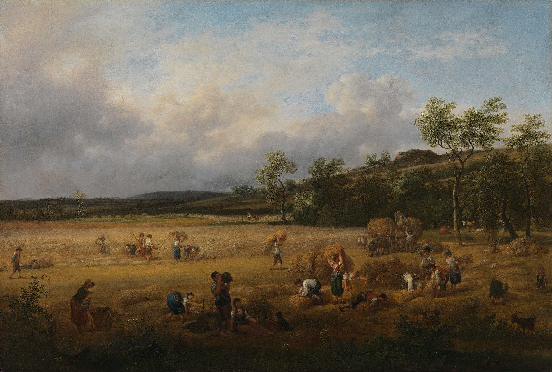 Erntelandschaft