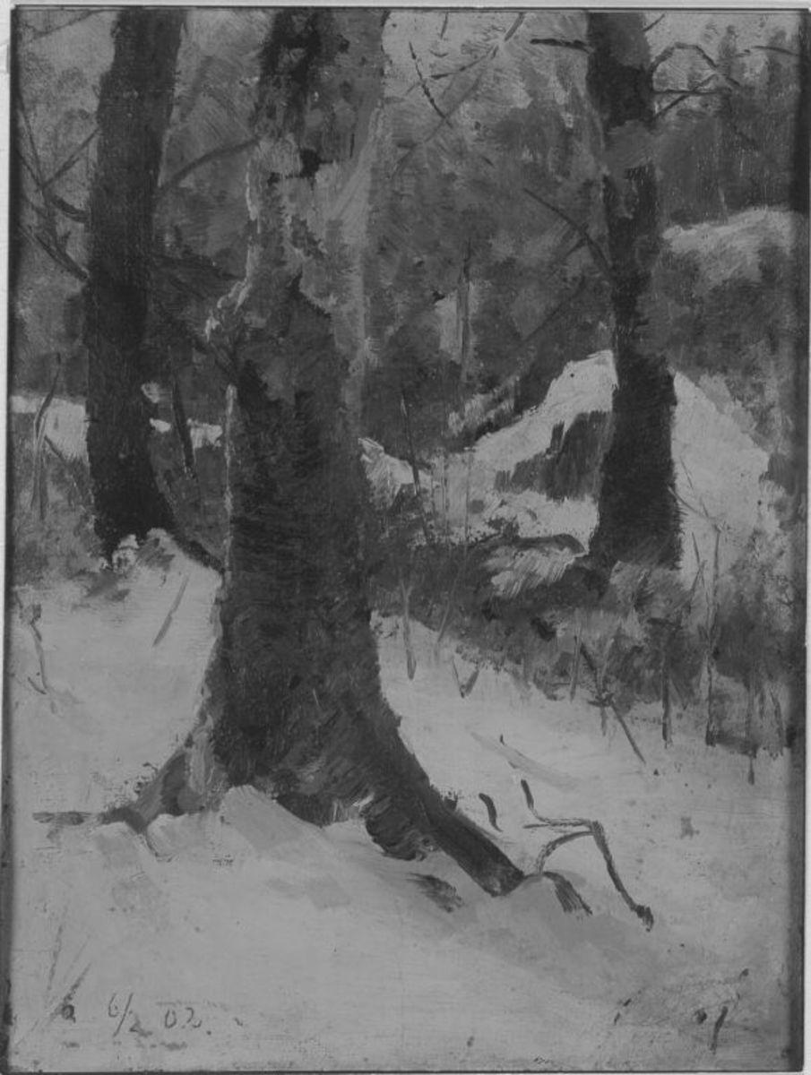 Buchen im Winter