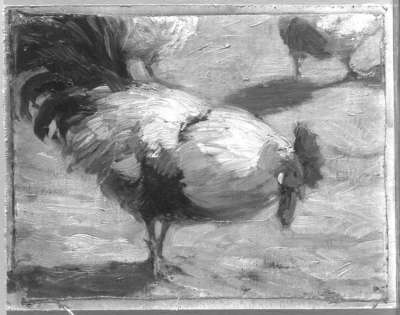 Der Gockelhahn