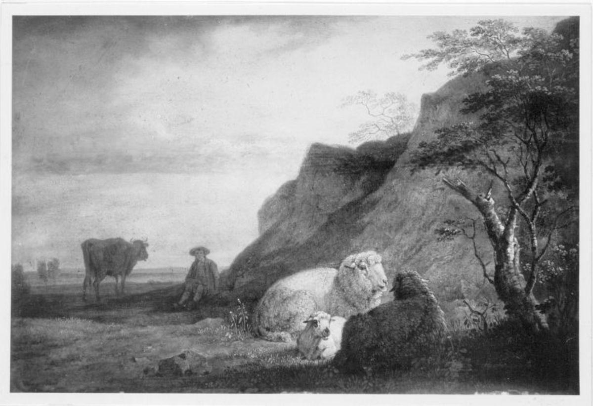 Ruhende Schafe