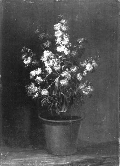 Blumenstück (Weiße Levkojen)