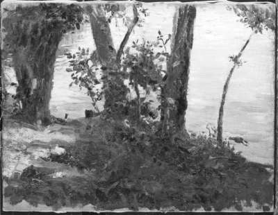Landschaft mit Bäumen