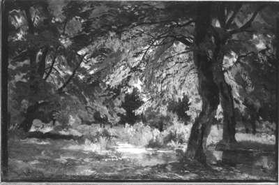 Waldinneres